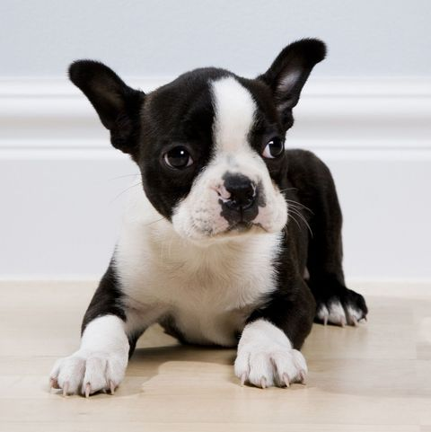 25 Best Small Dog Breeds The Most