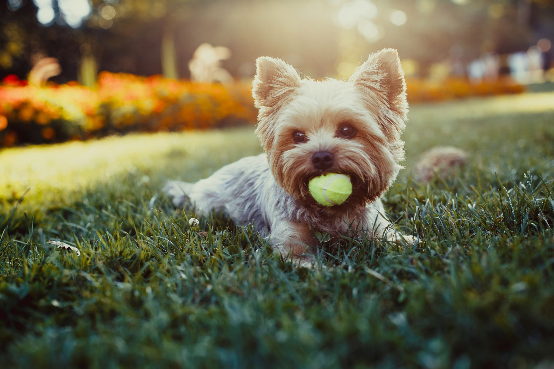25 Best Small Dog Breeds — The Most Popular Small Dogs