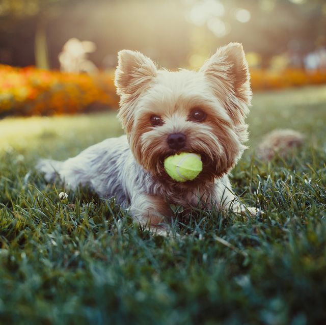 25 Best Small Dog Breeds The Most Popular Small Dogs