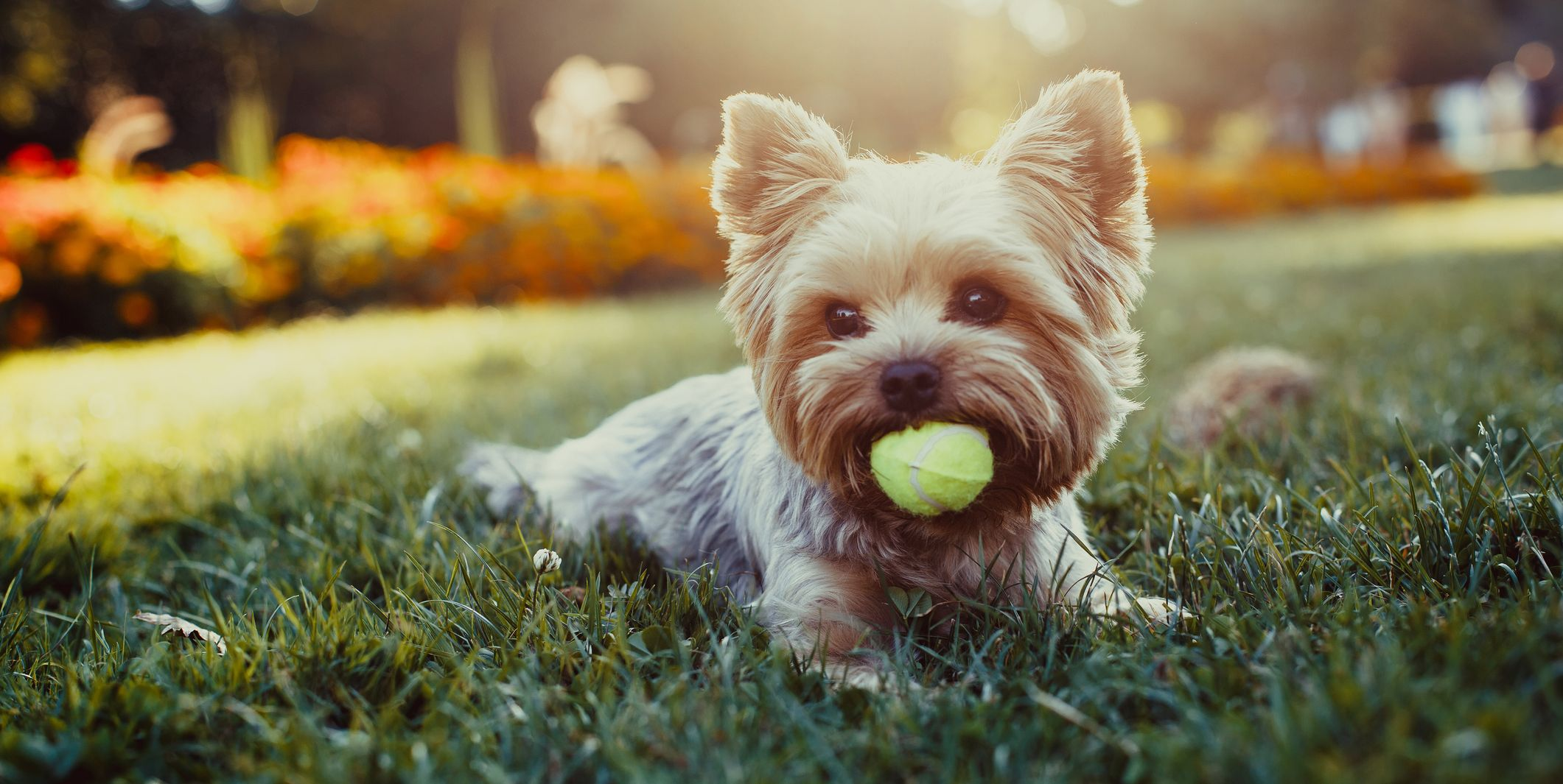 20 Small Dog Breeds That Are Perfect For Any Home