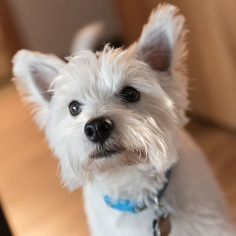33 Best Small Dog Breeds The Most Popular Small Dogs
