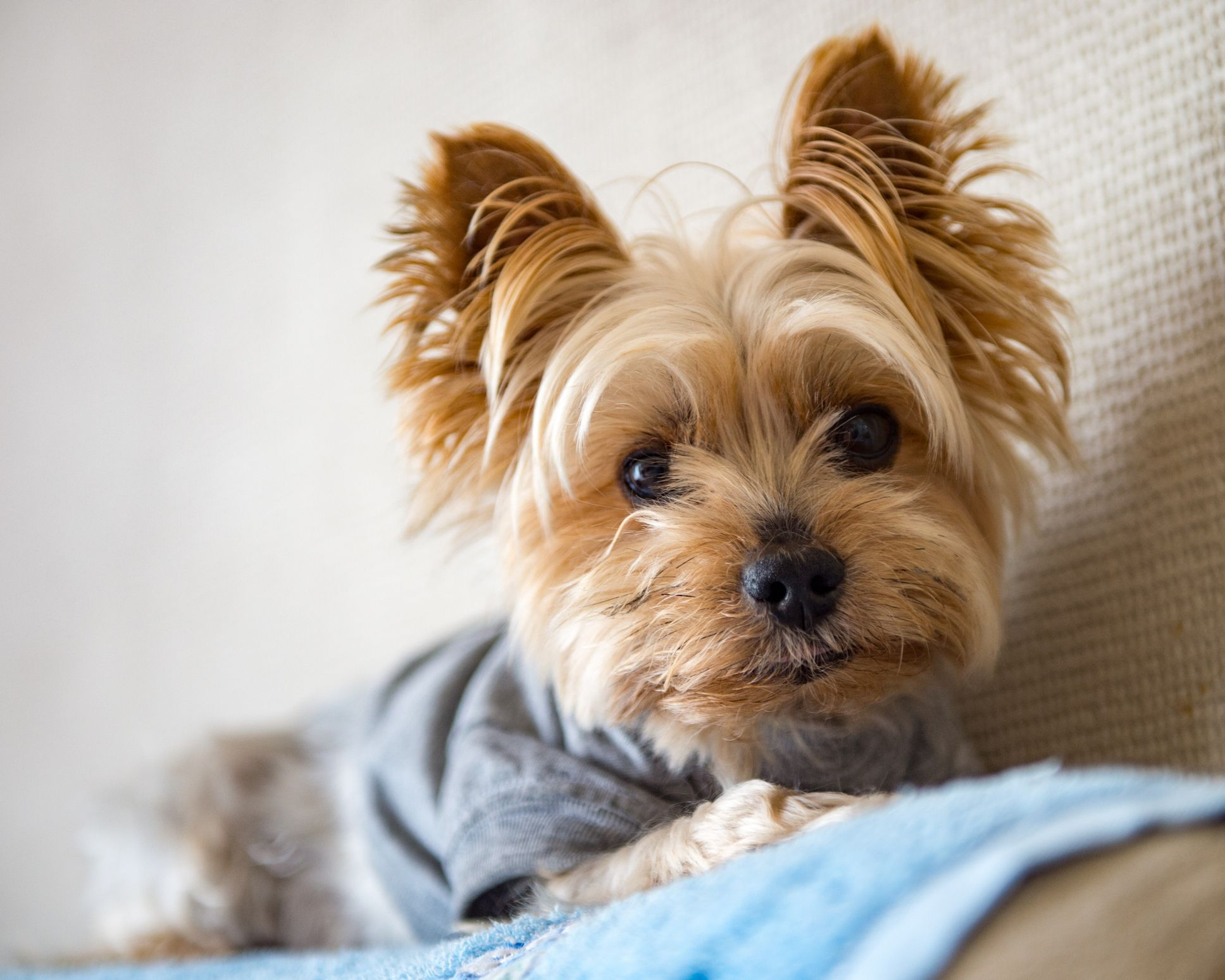 25 Best Small Dog Breeds — The Most