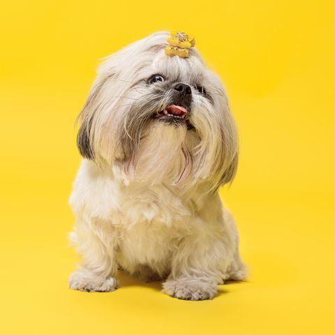 small dog names alona