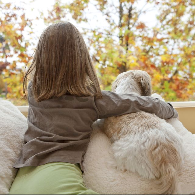 12 Small Dog Breeds Good With Kids: Shih Tzu, Maltese, And