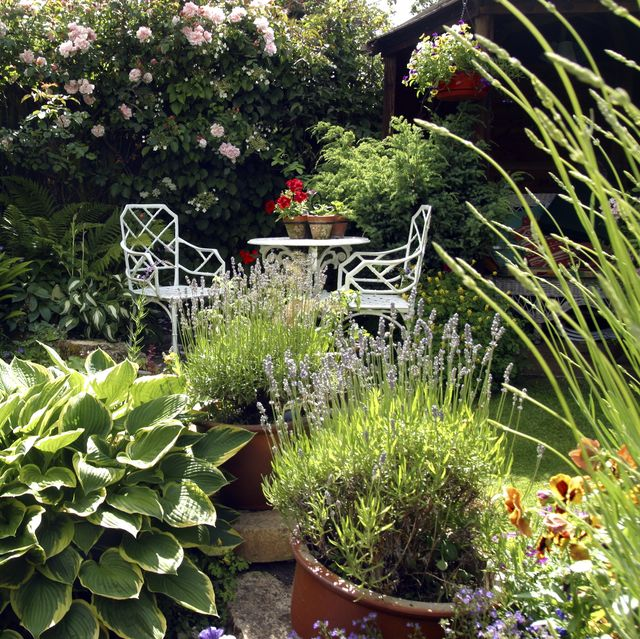 small densely planted summer garden with shrubs and colour
