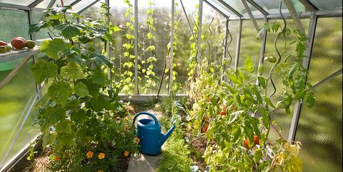 How To Build A Greenhouse Diy Greenhouse