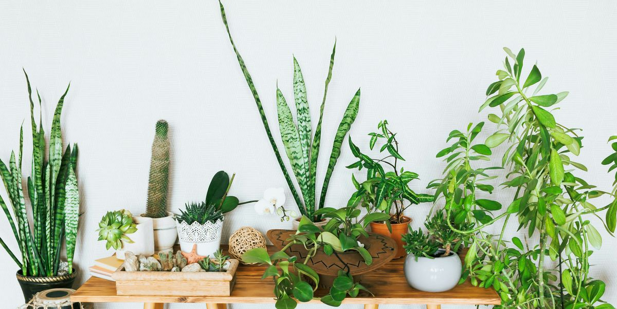 21 Small Indoor Houseplants 2021— Small Plants That Won't Take Up Space