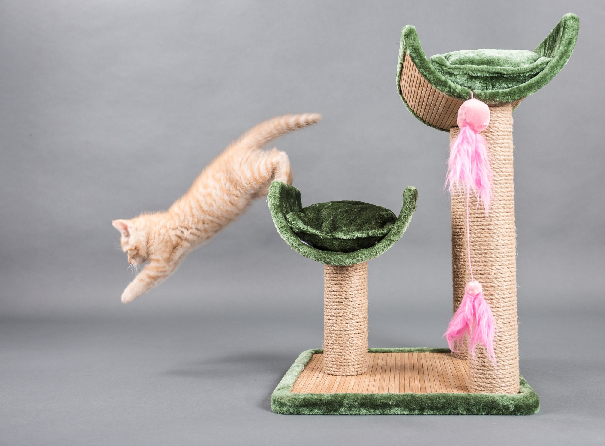 Benefits Of Cat Tree For Your Cat