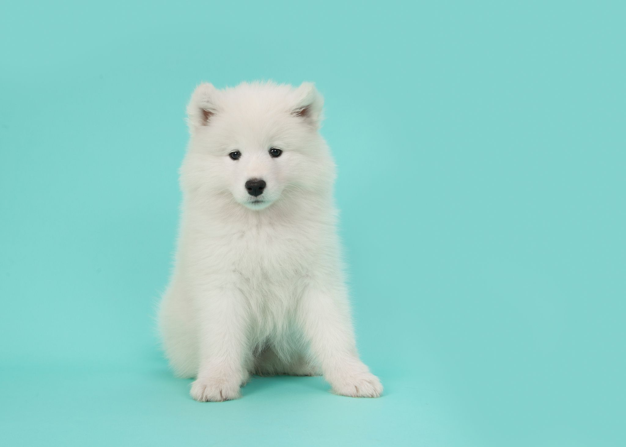 15 Small White Dog Breeds Little