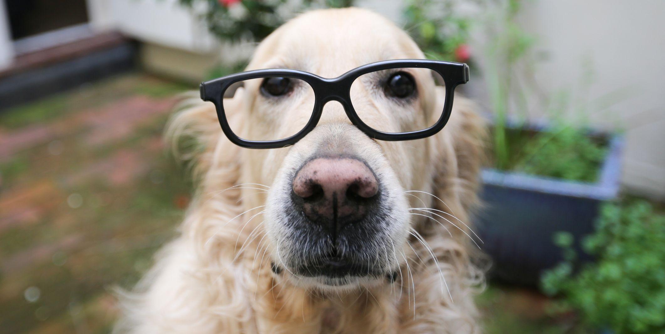 The Top 15 Smartest Dog Breeds