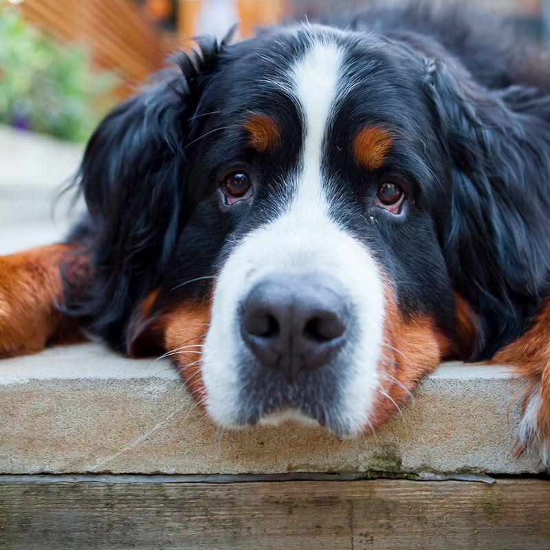 The 20 Smartest Dog Breeds — Most