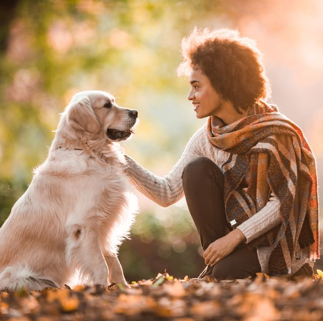 smiling black woman talking to her retriever in autumn day