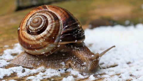 Snail farm in southern Russia