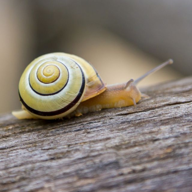 these 2 pests could invade uk gardens this weekend, warns the rhs