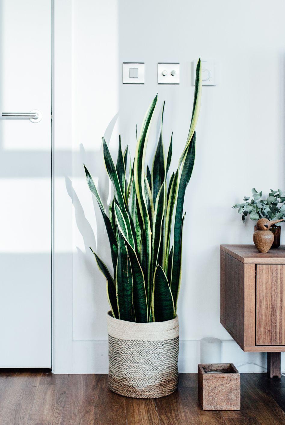 32 Best Indoor Plants   Easy Indoor Gardening Ideas