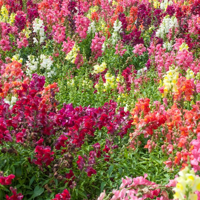 What To Plant In May Best Flowers And Vegetables To Plant In May