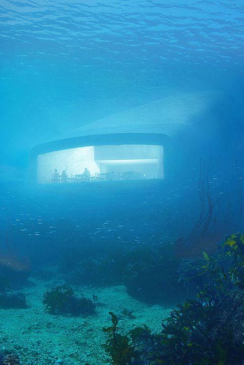 Underwater, Water, Blue, Marine biology, Azure, Reef, Organism, Sea, Ocean, Coral reef,