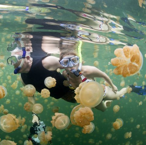 old wives tales - Snorkeling Jellyfish Lake