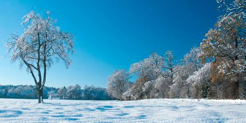 Winter, Snow, Sky, Natural landscape, Nature, Tree, Frost, Blue, Freezing, Branch,