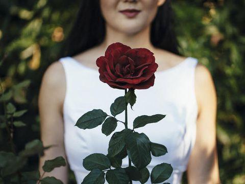 Petal, Flower, Beauty, Carmine, Rose family, Garden roses, Hybrid tea rose, Rose order, Rose, Flowering plant,