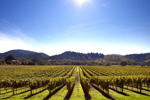 Agriculture, Field, Vineyard, Sky, Plantation, Crop, Cash crop, Hill station, Plant, Rural area,