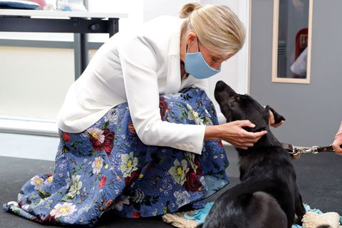 the countess of wessex and princess alexandra visit guide dogs for the blind