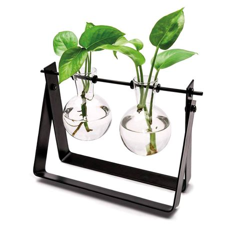 Leaf, Flowerpot, Plant, Houseplant, Flower, Glass, Anthurium,