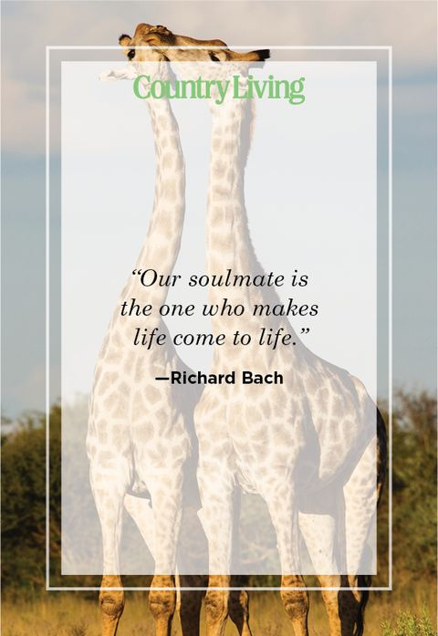 soulmate quote by Richard Bach