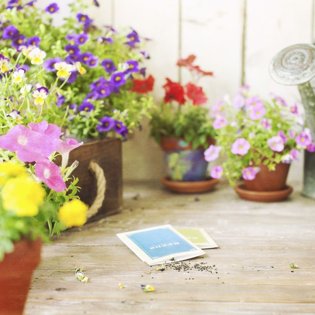 spring garden flowers and flower seeds on an old wood table and wood background focus on seeds