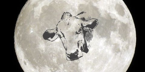 Bovine, Black-and-white, Snout, Monochrome photography, Photography, Drawing, Monochrome, Cow-goat family, Space, World,