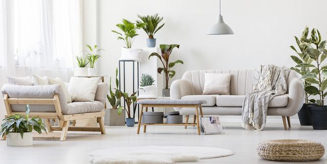 12 Houseplants That Will Literally Give Your Home a Breath of Fresh Air