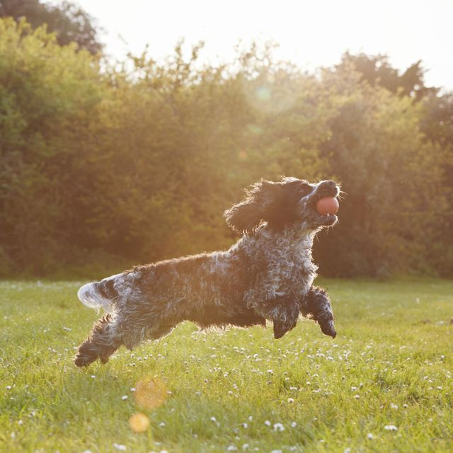 6 ways to protect your dogs from skin cancer in the sun
