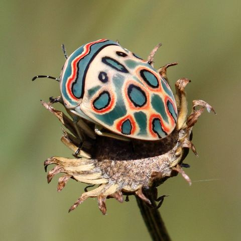 prettiest insects in the world