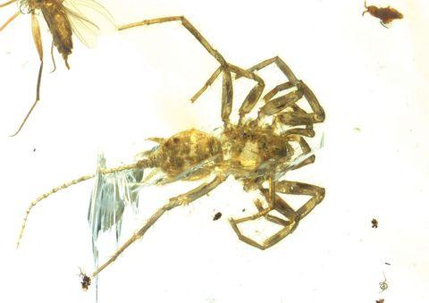 Insect, Pest, Invertebrate, Organism, Spider, Arthropod, Macro photography,