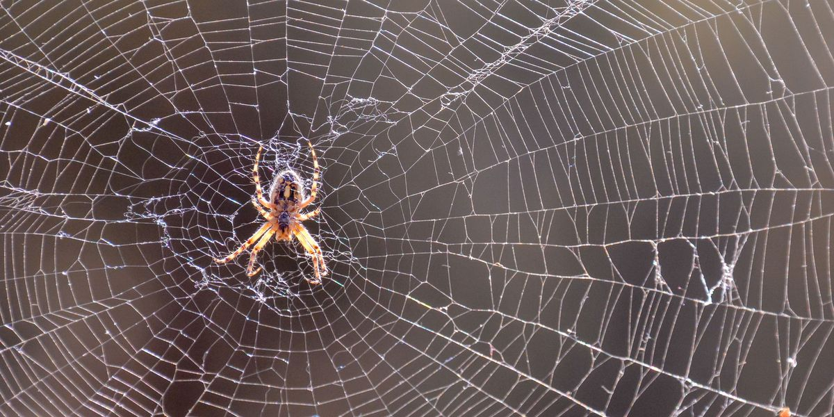 Where Do Spiders Go in the Winter? Pest Pros Explain How They Survive the Cold