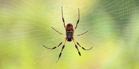7 Spider Bite Pictures And How To Treat Symptoms
