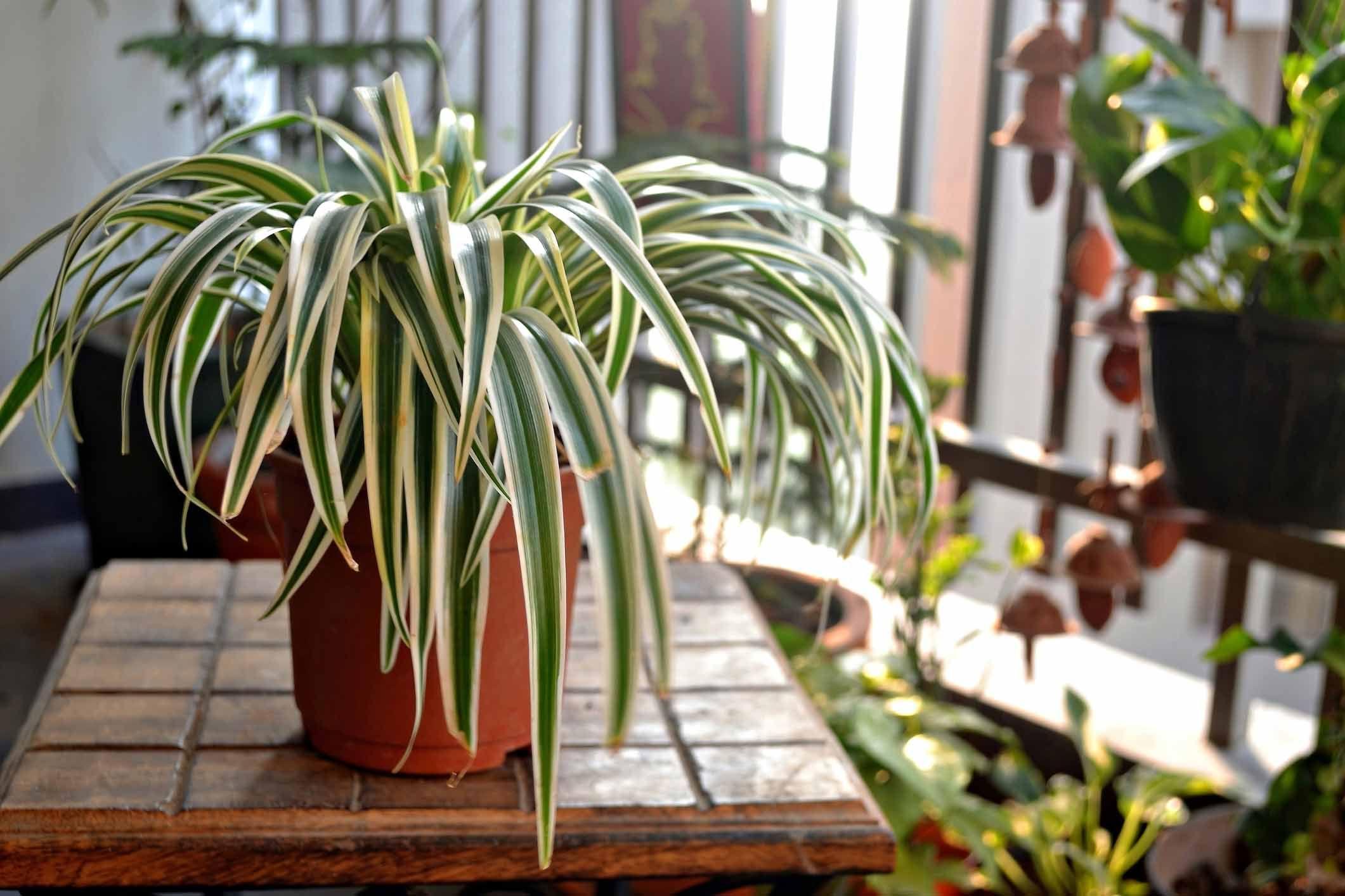 Planten In Woonkamer : Makkelijke planten wij hebben kamerplanten voor je op een rij