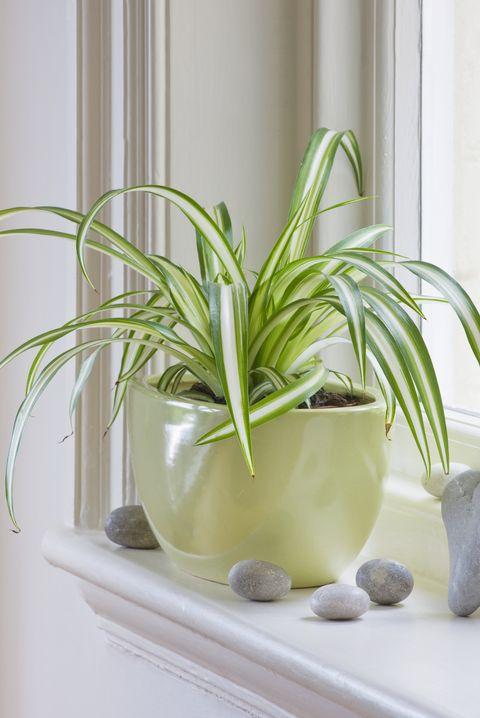 15 Best Kitchen Plants Houseplants To