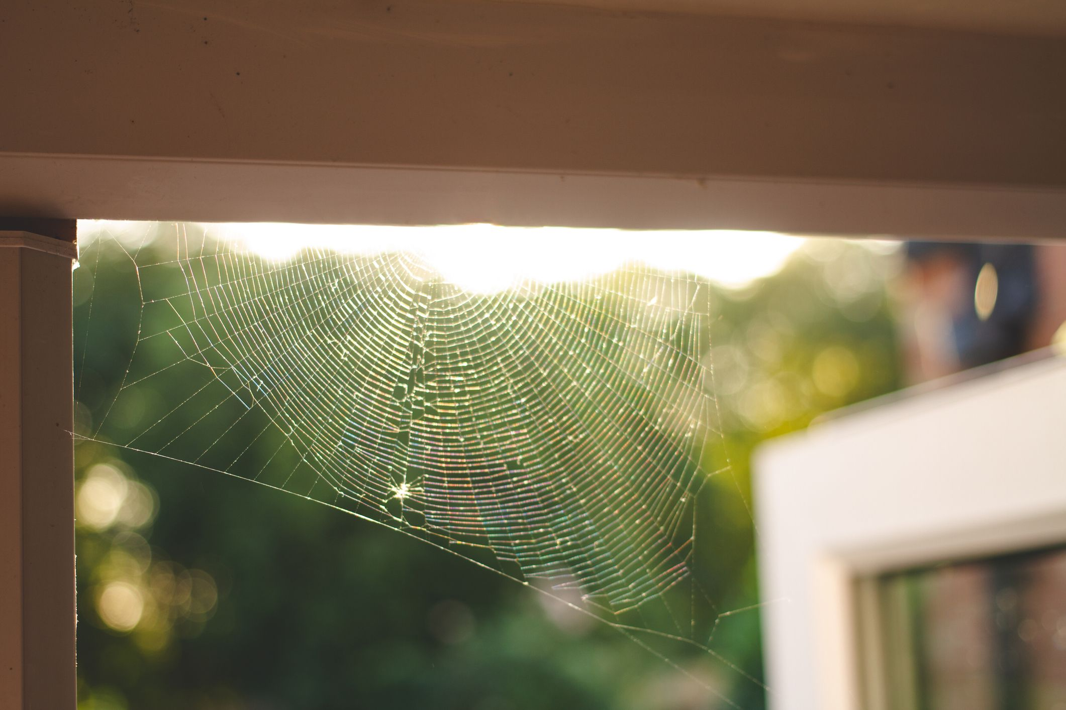 8 British spiders you're likely to find at home this autumn