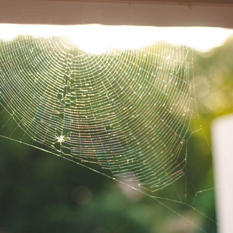 uk spiders