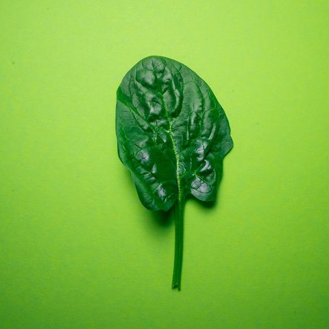 spinach on green background