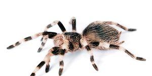 spinnen huis tips