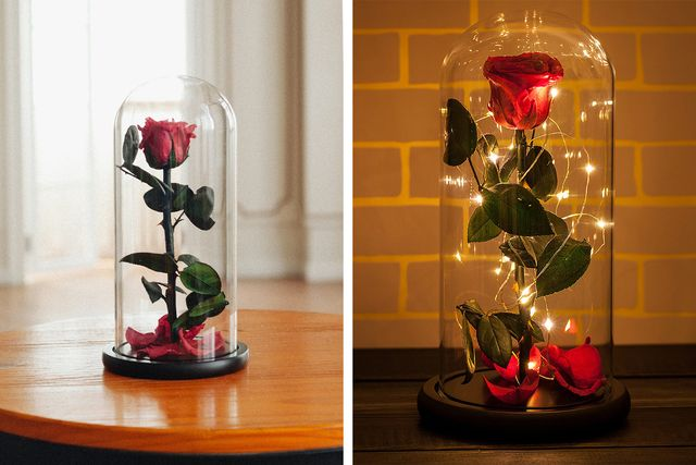 rosephoria sealed rose