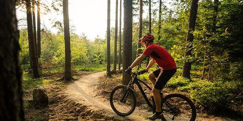 mountain biking trail forest
