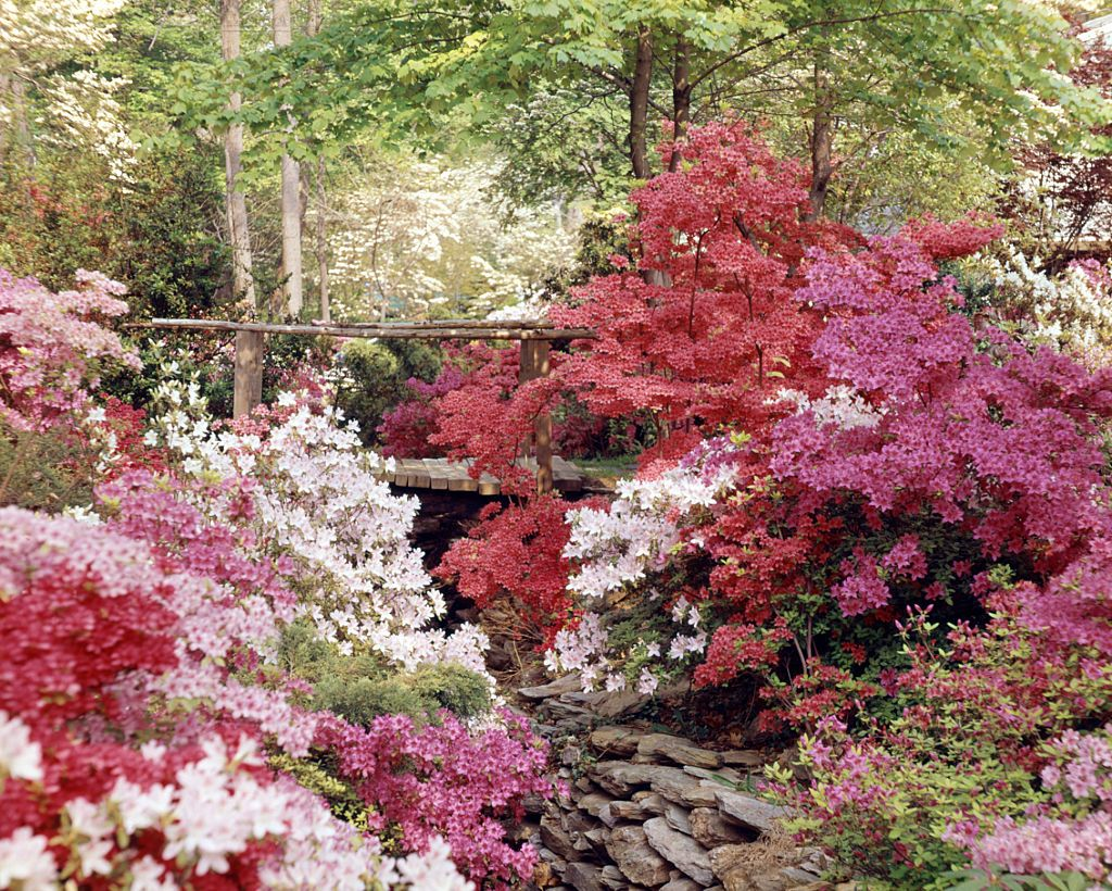House Beautiful & The 10 Best Evergreen Flowering Shrubs