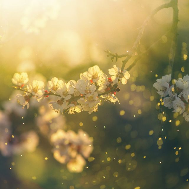 2 common pollen types and the worst affected regions in the uk