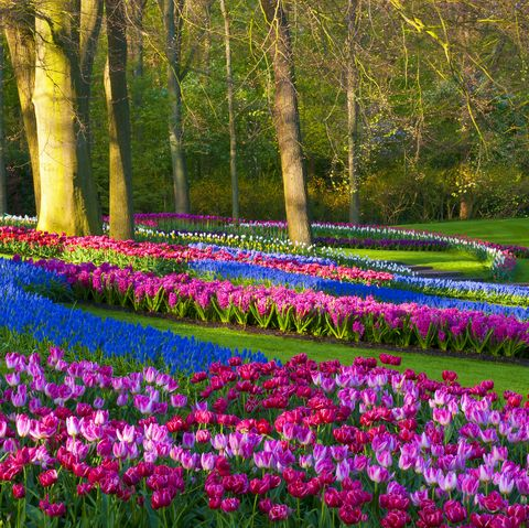 Spring Flowers in a Park