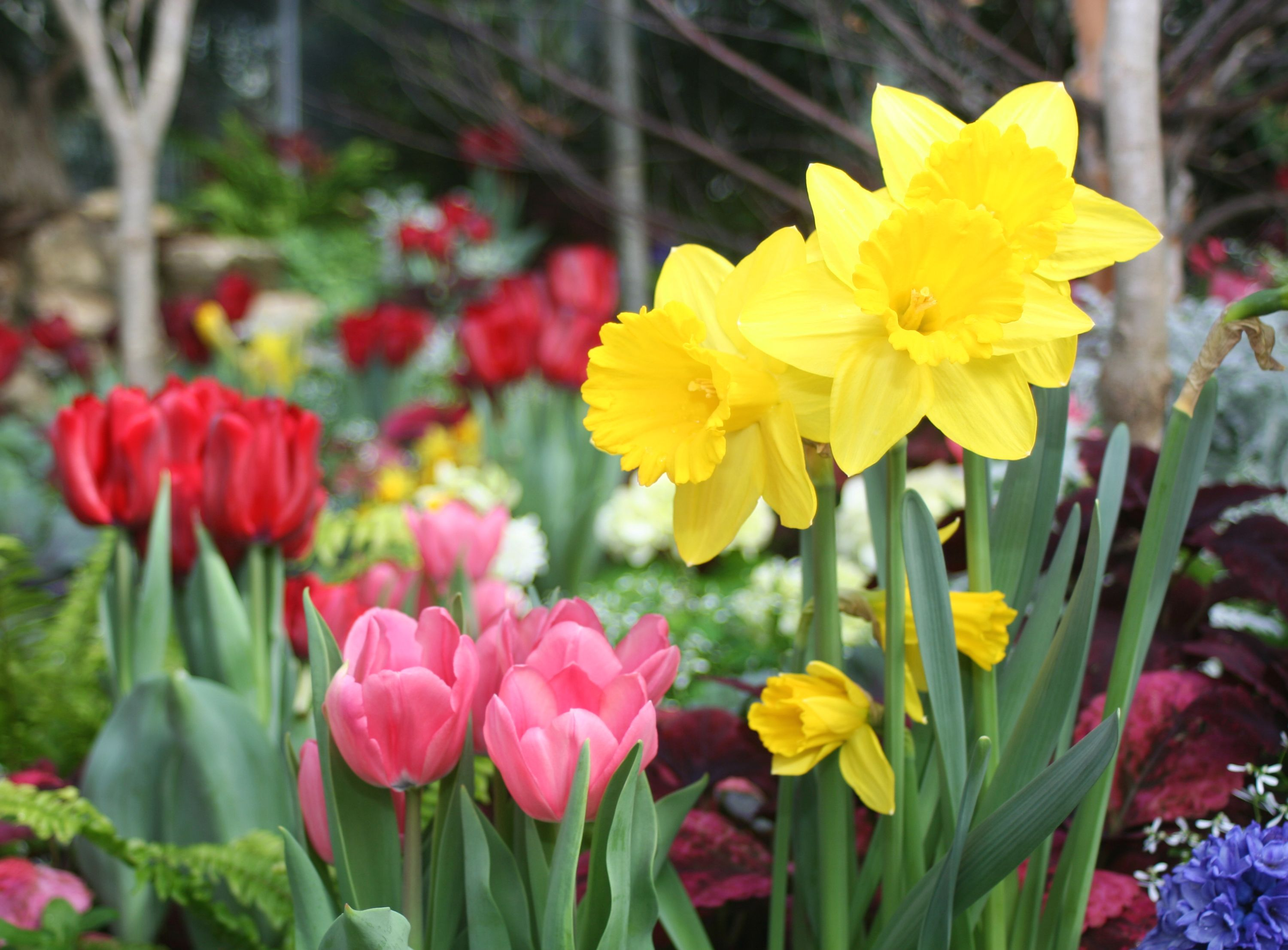 11 Best Flowers to Plant for Spring - When to Plant Daffodils ...