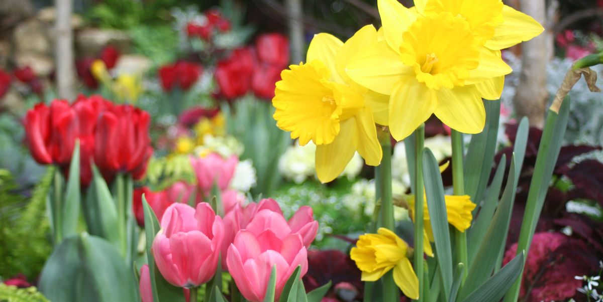 11 Best Flowers To Plant For Spring When To Plant Daffodils Tulips Rhododendrons And More