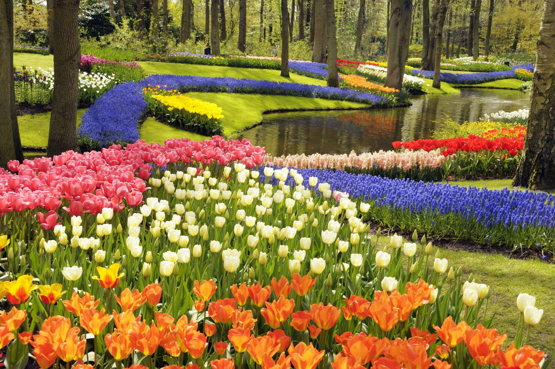 10 must-have experiences at Holland's Keukenhof Gardens